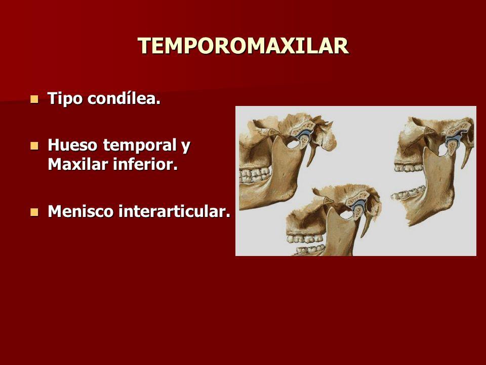 TEMPOROMAXILAR Tipo condílea. Hueso temporal y Maxilar inferior.