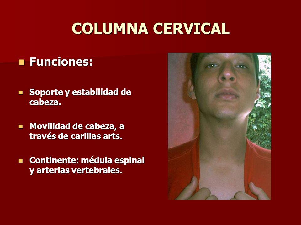 COLUMNA CERVICAL Funciones: Soporte y estabilidad de cabeza.