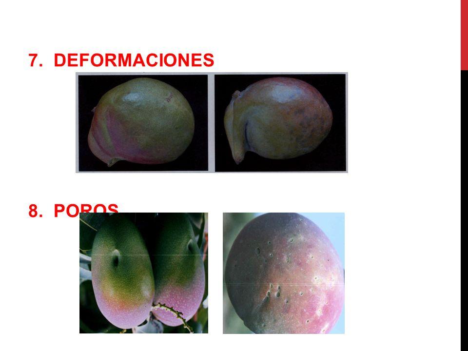 7. DEFORMACIONES 8. POROS