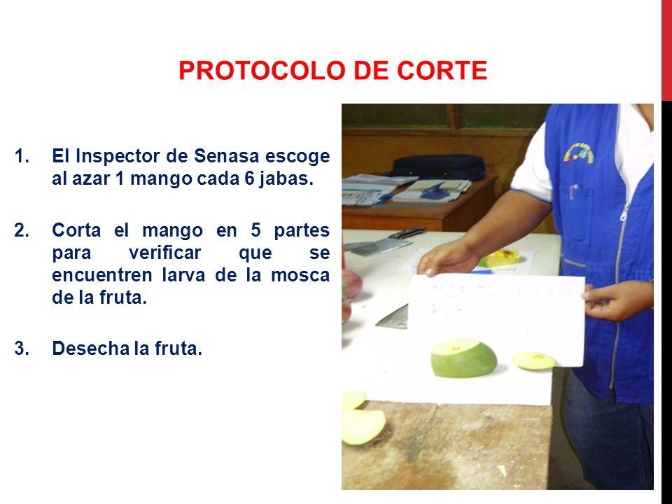 PROTOCOLO DE CORTE El Inspector de Senasa escoge al azar 1 mango cada 6 jabas.
