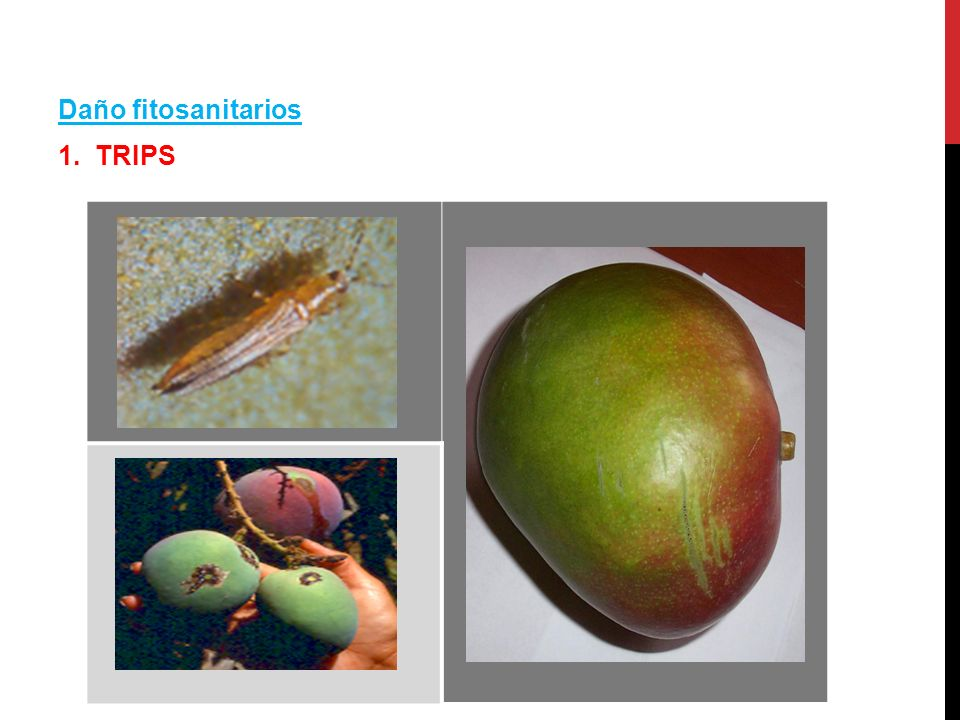 Daño fitosanitarios 1. TRIPS