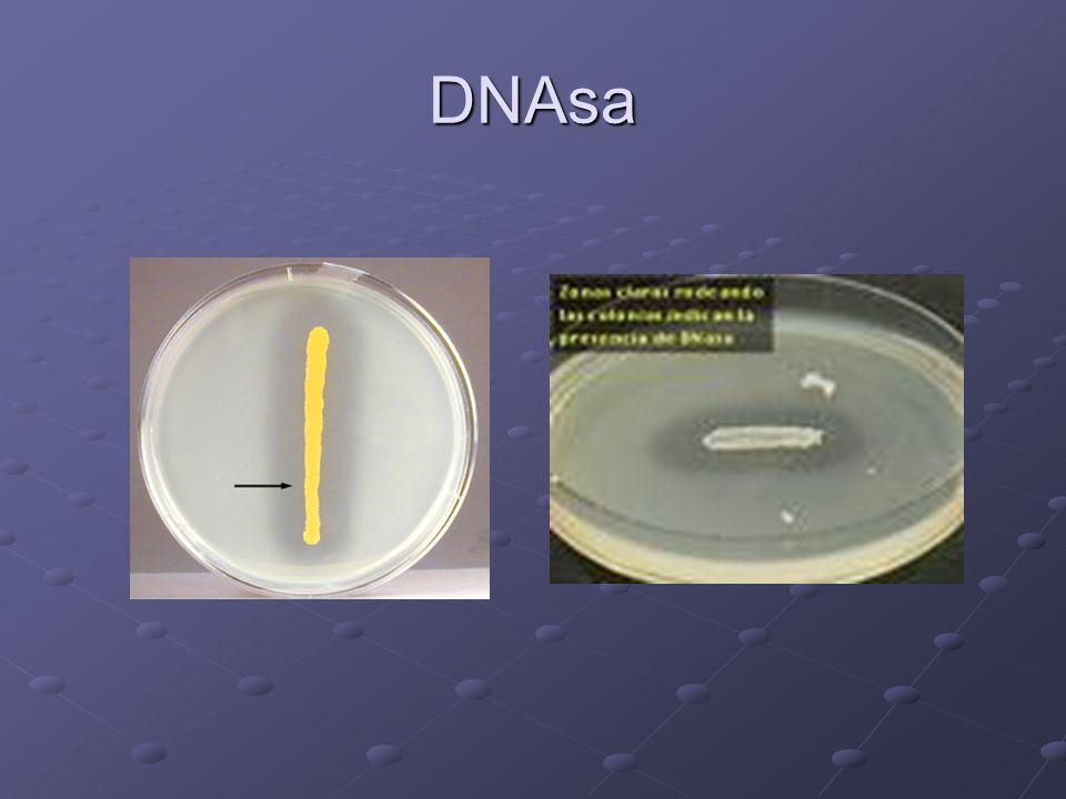 DNAsa