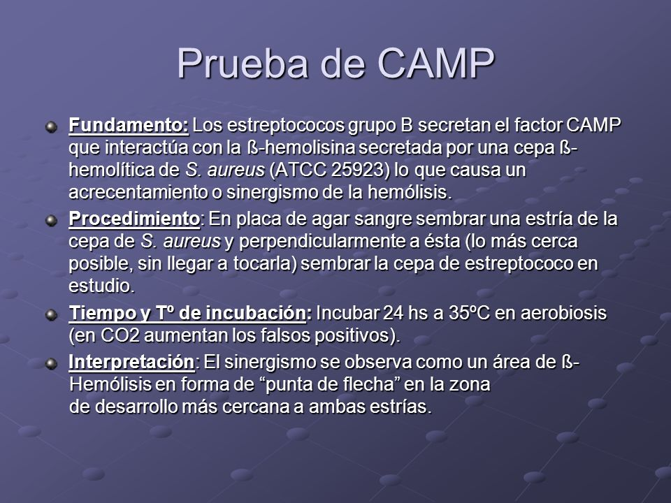 Prueba de CAMP