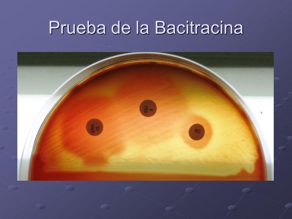 Prueba de la Bacitracina