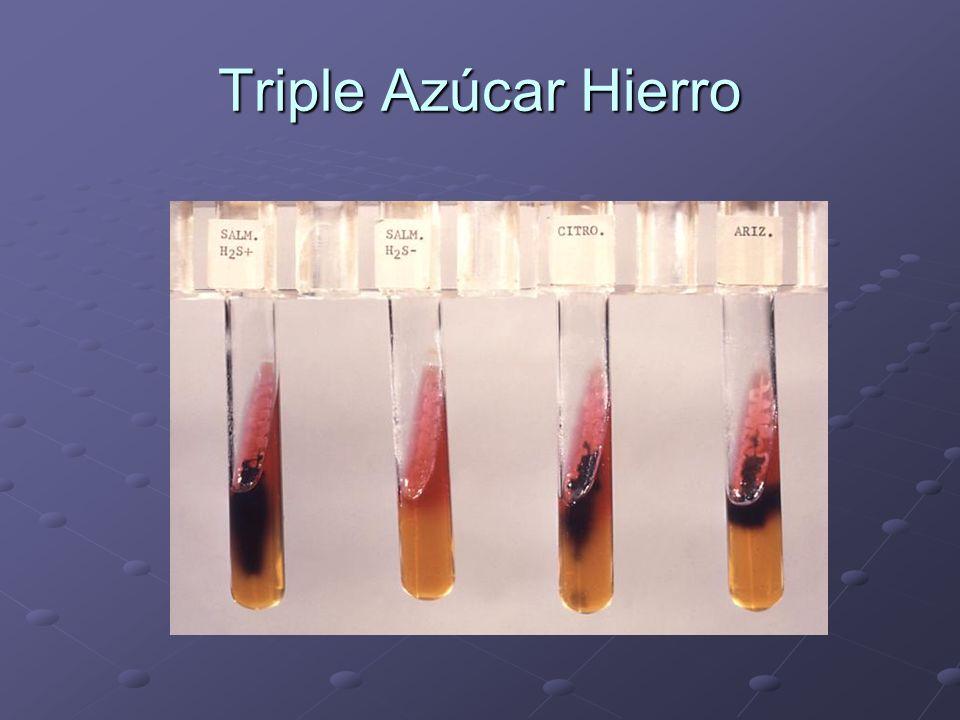 Triple Azúcar Hierro