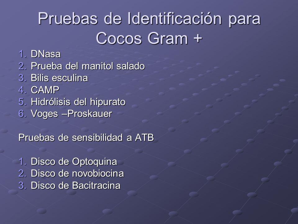 Pruebas de Identificación para Cocos Gram +