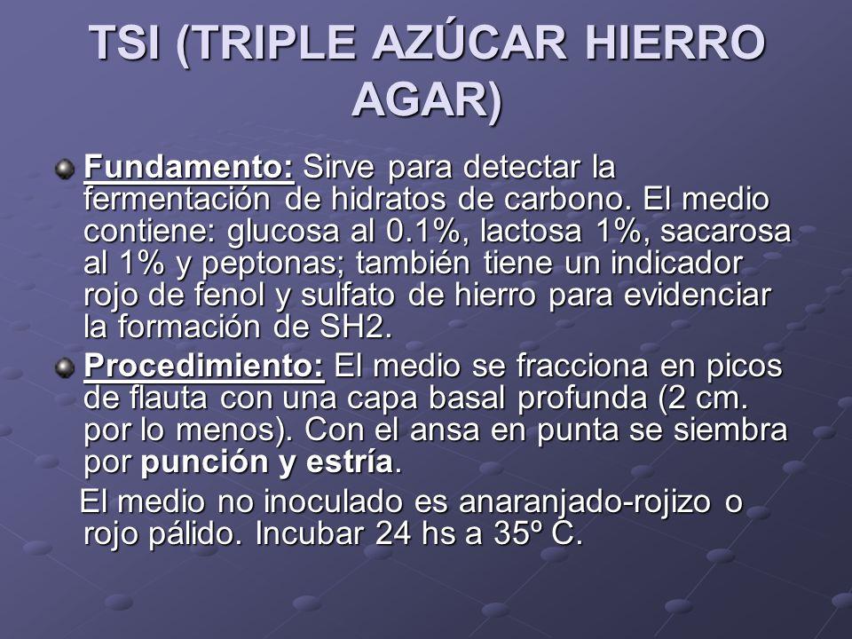 TSI (TRIPLE AZÚCAR HIERRO AGAR)
