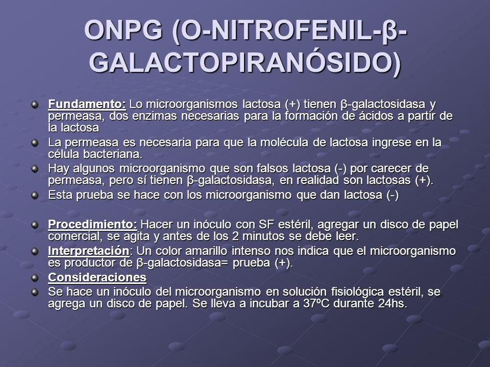 ONPG (O-NITROFENIL-β-GALACTOPIRANÓSIDO)