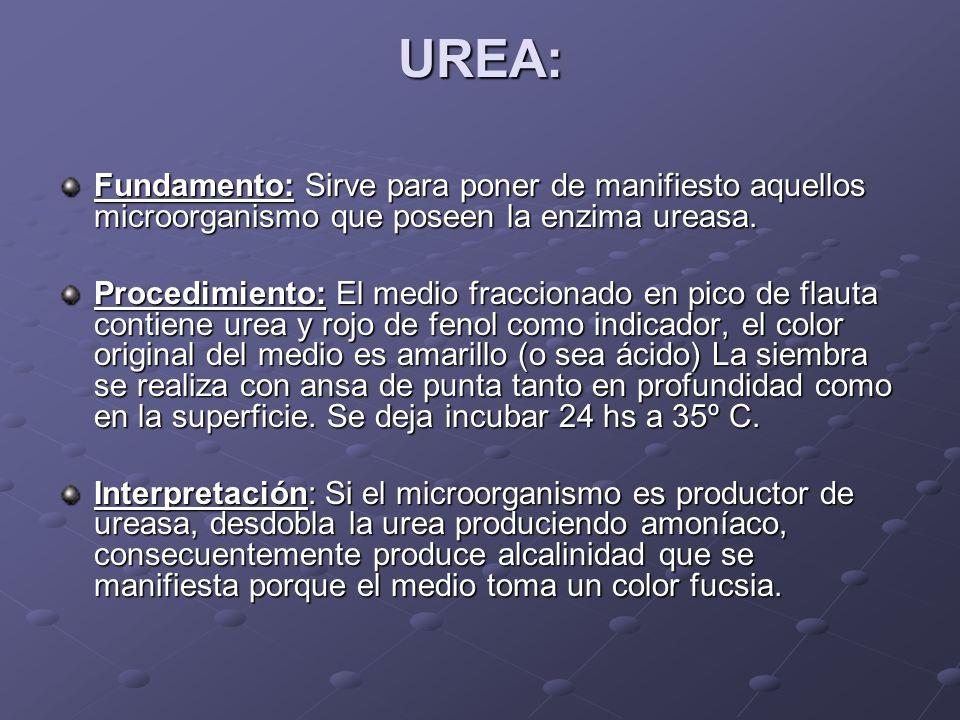 UREA: Fundamento: Sirve para poner de manifiesto aquellos microorganismo que poseen la enzima ureasa.