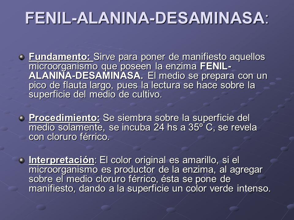FENIL-ALANINA-DESAMINASA: