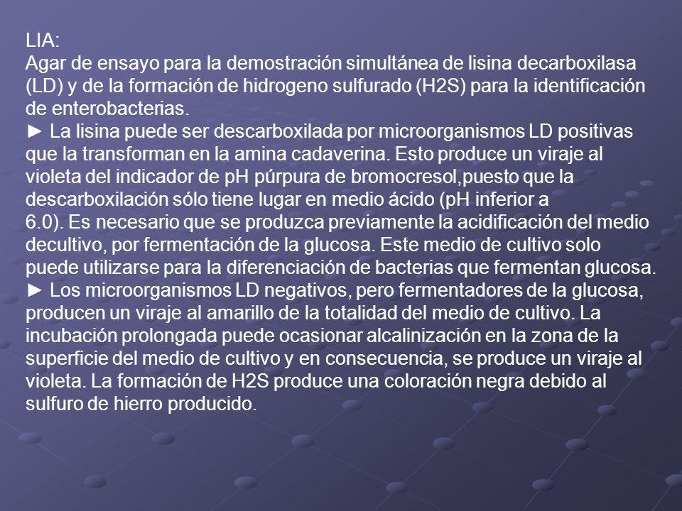LIA: Agar de ensayo para la demostración simultánea de lisina decarboxilasa.