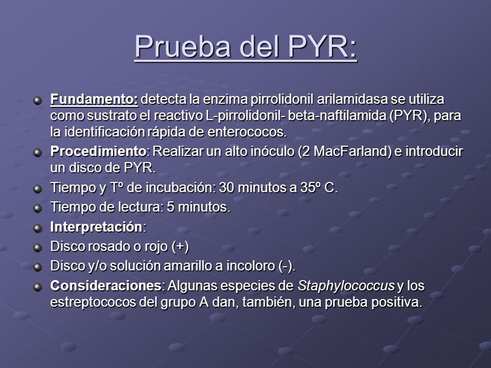 Prueba del PYR: