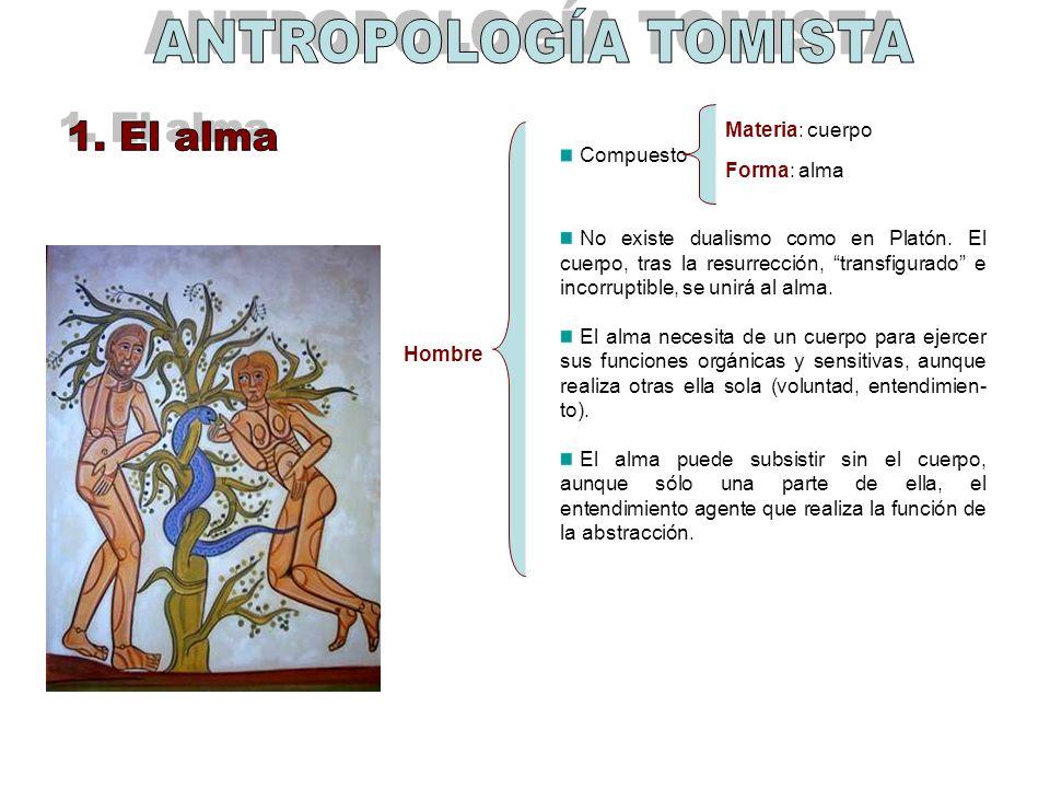 ANTROPOLOGÍA TOMISTA 1. El alma Materia: cuerpo Compuesto Forma: alma