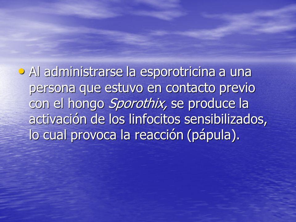Al administrarse la esporotricina a una persona que estuvo en contacto previo con el hongo Sporothix, se produce la activación de los linfocitos sensibilizados, lo cual provoca la reacción (pápula).