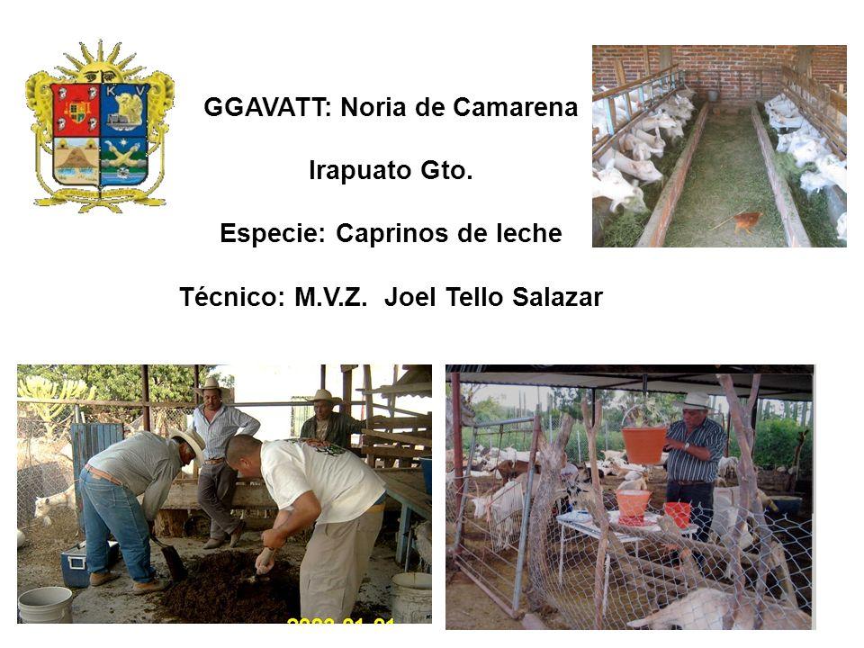 GGAVATT: Noria de Camarena Irapuato Gto.