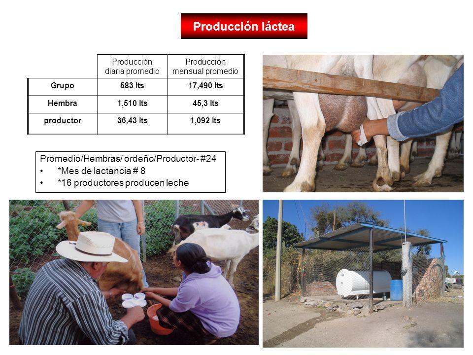 Producción láctea Promedio/Hembras/ ordeño/Productor- #24