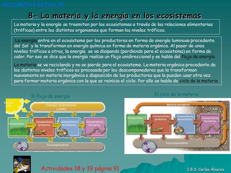 8- La materia y la energía en los ecosistemas