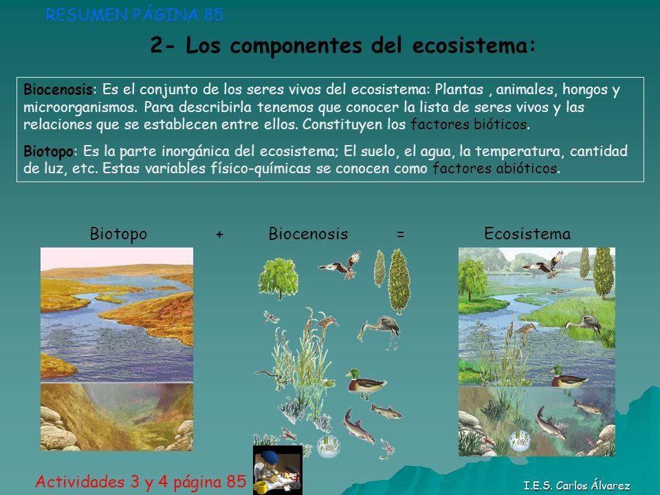 2- Los componentes del ecosistema: