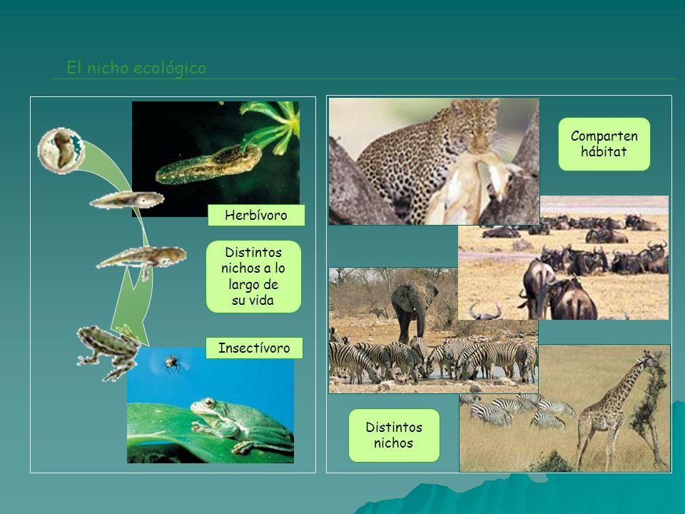 El nicho ecológico Comparten hábitat Herbívoro Distintos nichos a lo