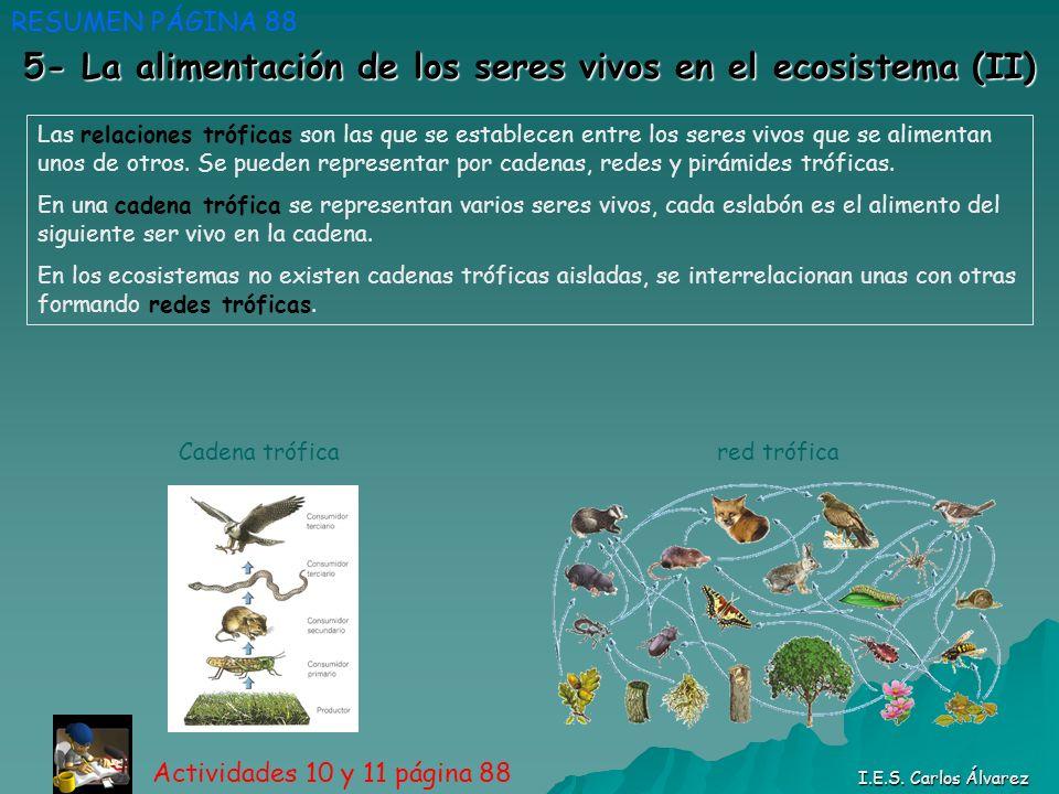 5- La alimentación de los seres vivos en el ecosistema (II)