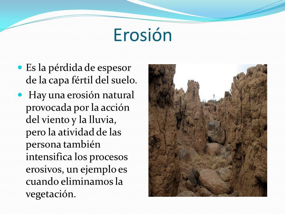 Deforestaci n erosi n p rdida de suelo y desertizaci n for Que es la clausula suelo de los bancos