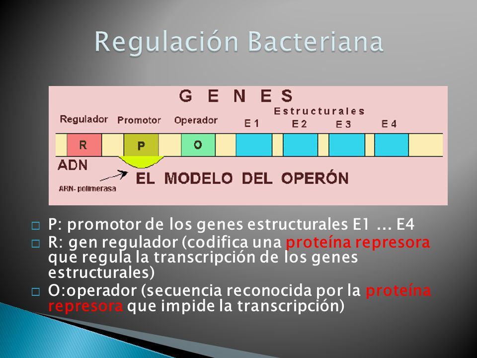 Regulación Bacteriana