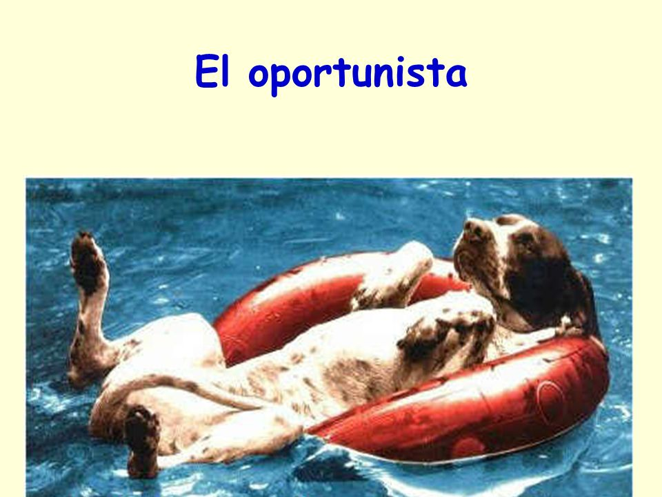 El oportunista Ici, on ne connait pas…. 23/03/2017 gilalme@gmail.com