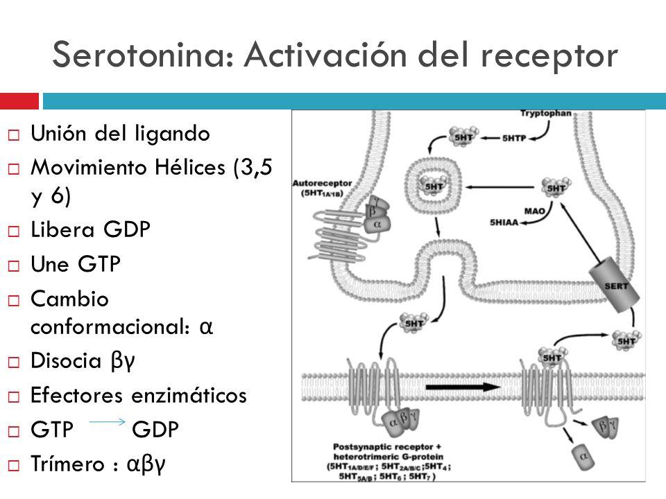 Serotonina: Activación del receptor