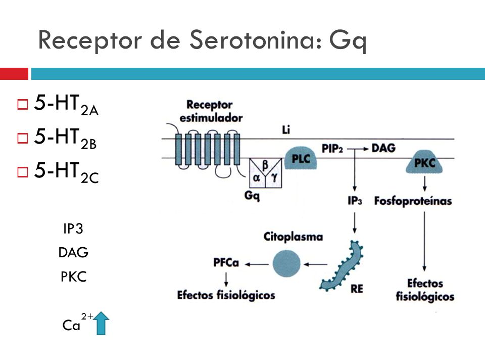 Receptor de Serotonina: Gq