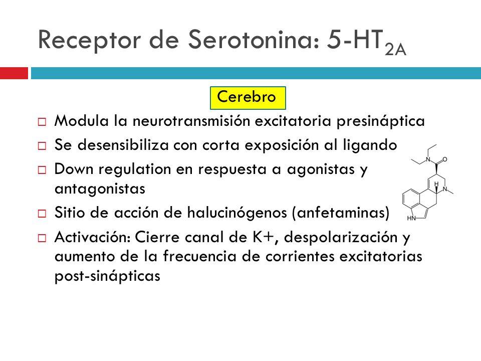 Receptor de Serotonina: 5-HT2A