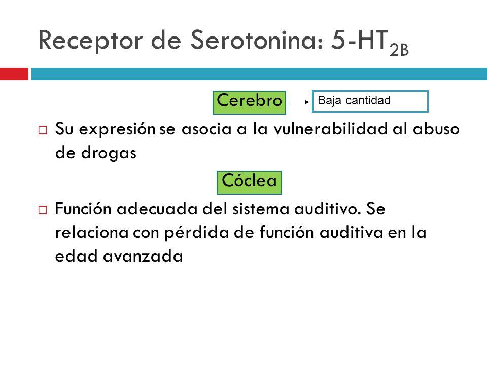 Receptor de Serotonina: 5-HT2B