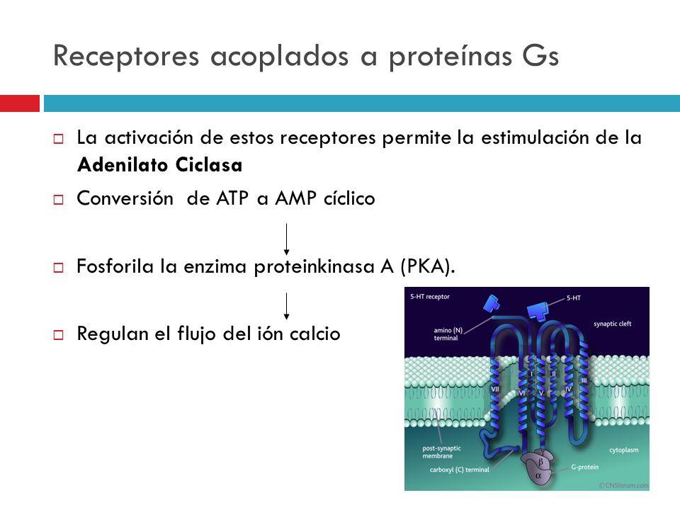 Receptores acoplados a proteínas Gs