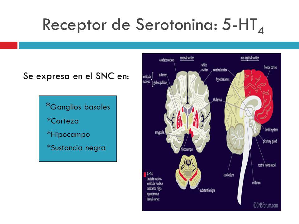Receptor de Serotonina: 5-HT4