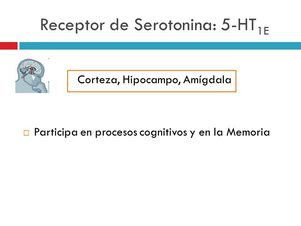 Receptor de Serotonina: 5-HT1E