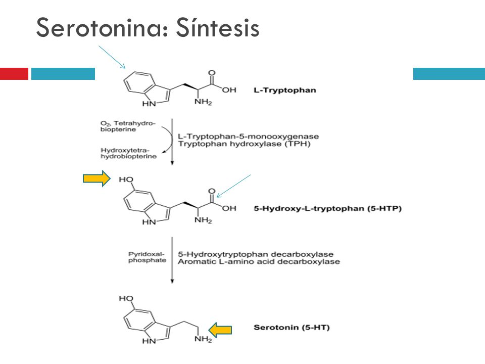 Serotonina: Síntesis