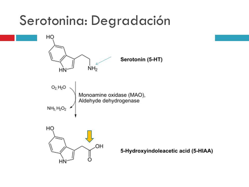 Serotonina: Degradación