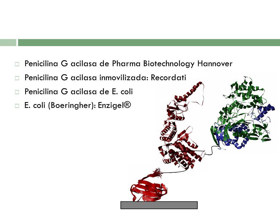 Penicilina G acilasa de Pharma Biotechnology Hannover