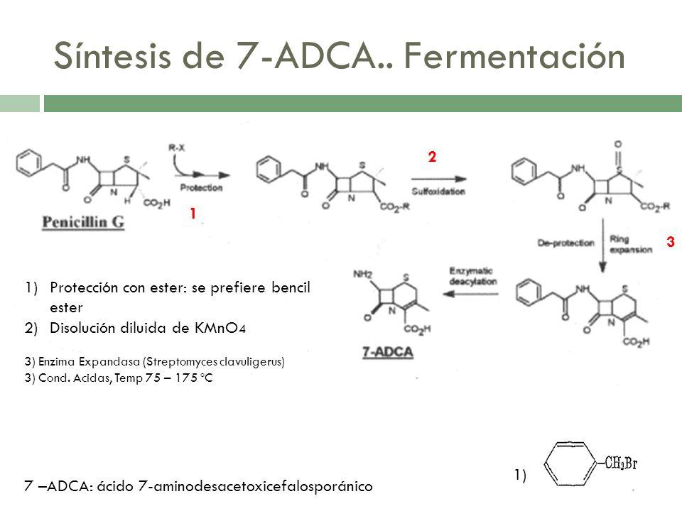 Síntesis de 7-ADCA.. Fermentación