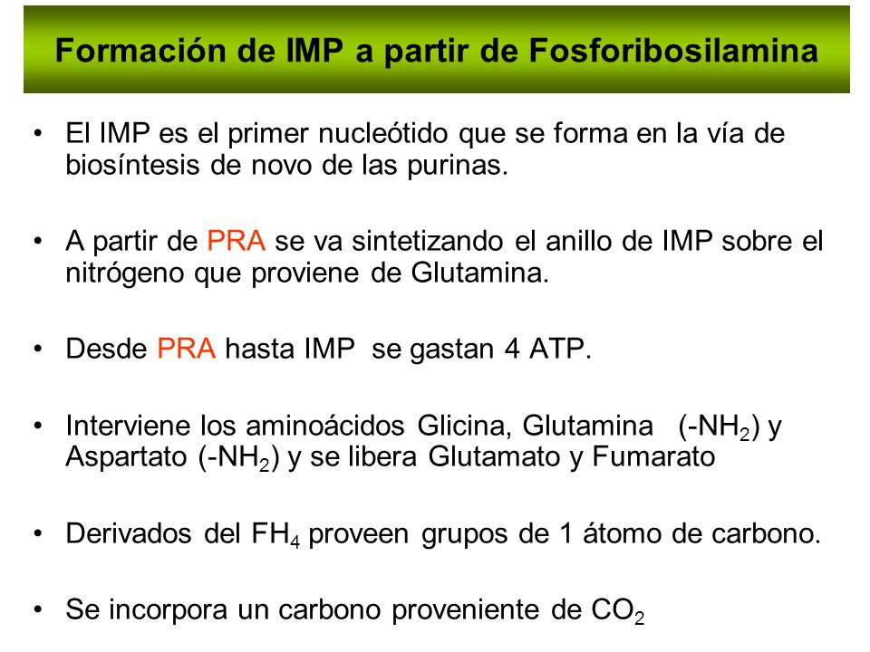 Formación de IMP a partir de Fosforibosilamina