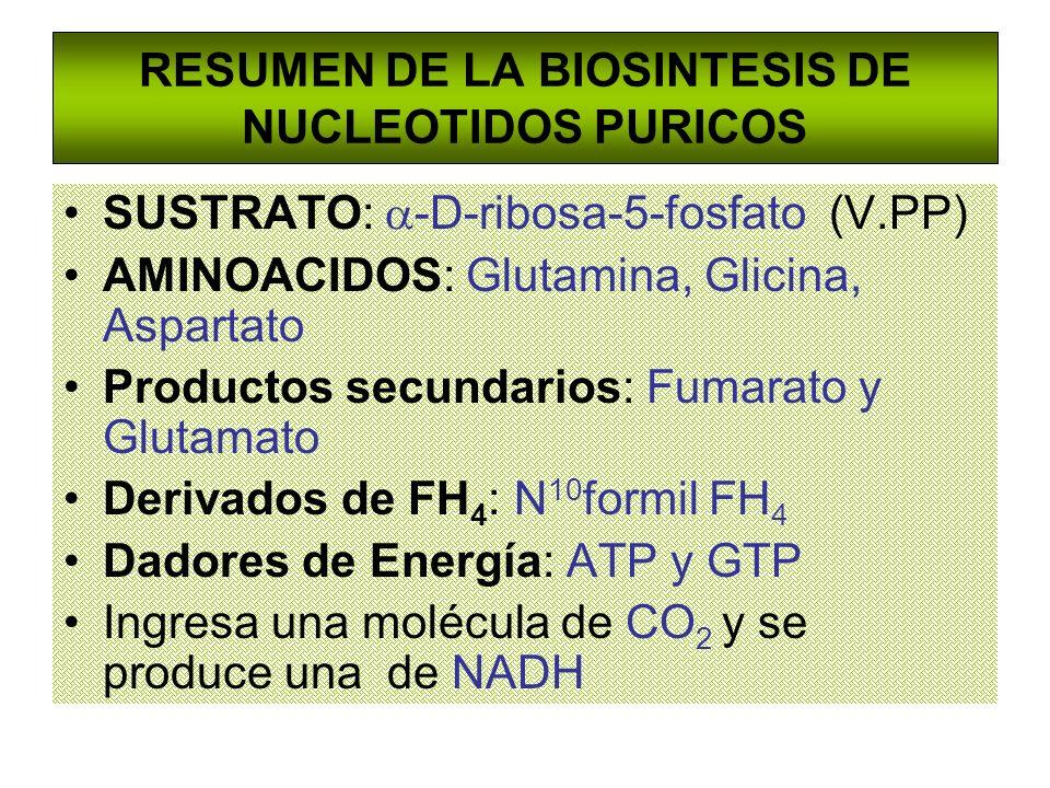 RESUMEN DE LA BIOSINTESIS DE NUCLEOTIDOS PURICOS