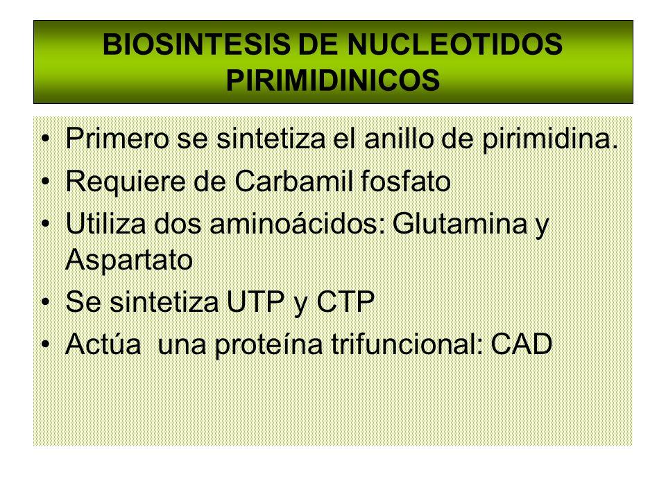 BIOSINTESIS DE NUCLEOTIDOS PIRIMIDINICOS