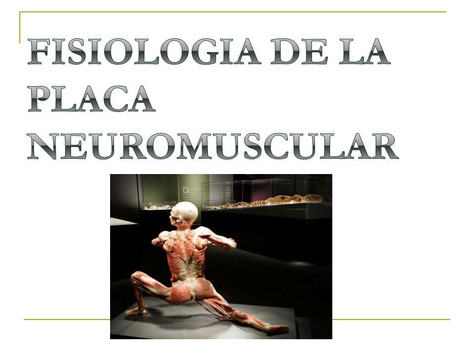 FISIOLOGIA DE LA PLACA NEUROMUSCULAR