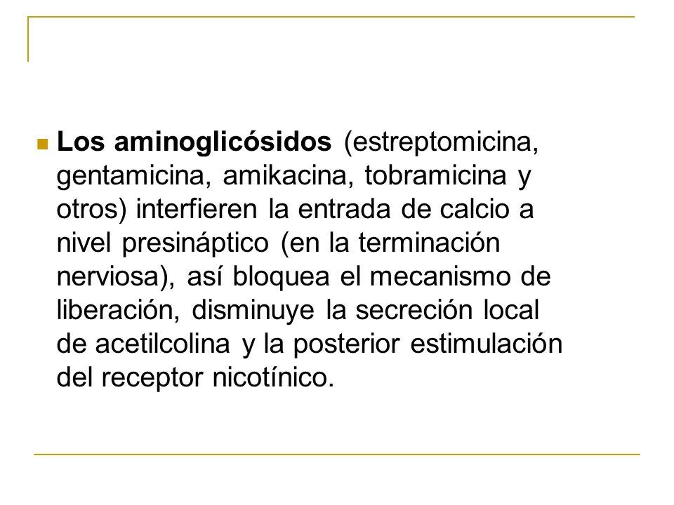 Los aminoglicósidos (estreptomicina, gentamicina, amikacina, tobramicina y otros) interfieren la entrada de calcio a nivel presináptico (en la terminación nerviosa), así bloquea el mecanismo de liberación, disminuye la secreción local de acetilcolina y la posterior estimulación del receptor nicotínico.