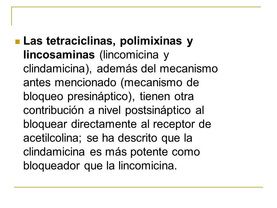 Las tetraciclinas, polimixinas y lincosaminas (lincomicina y clindamicina), además del mecanismo antes mencionado (mecanismo de bloqueo presináptico), tienen otra contribución a nivel postsináptico al bloquear directamente al receptor de acetilcolina; se ha descrito que la clindamicina es más potente como bloqueador que la lincomicina.