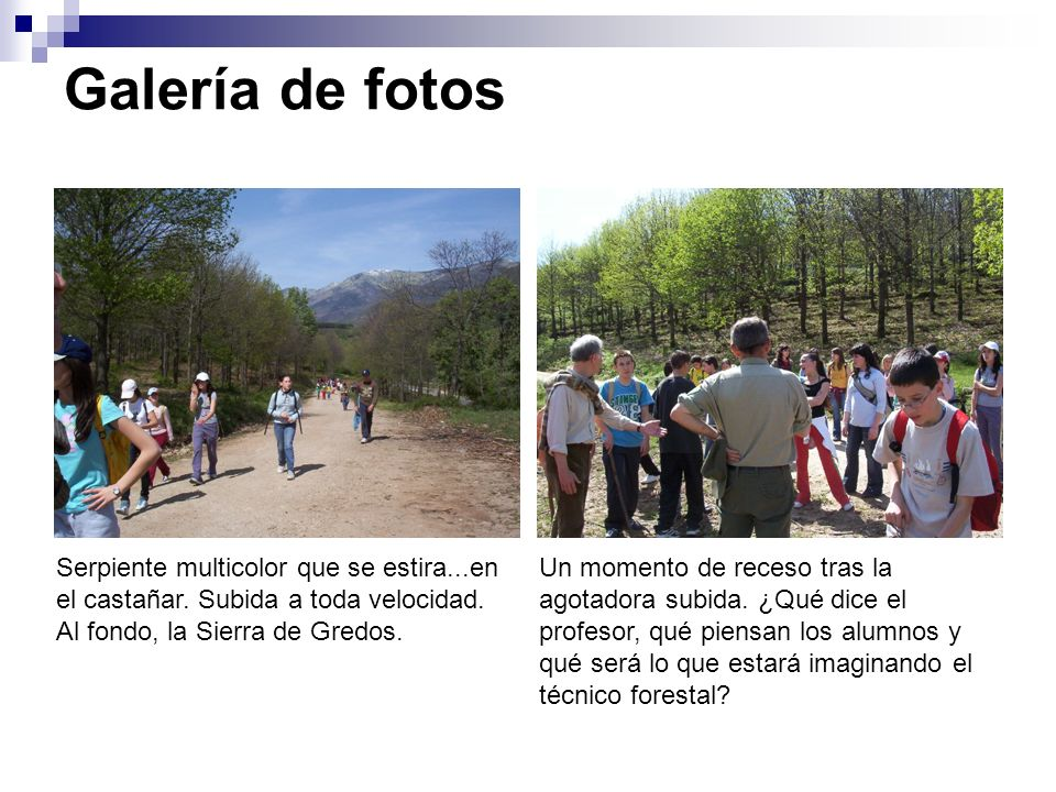 Galería de fotos Serpiente multicolor que se estira...en el castañar. Subida a toda velocidad. Al fondo, la Sierra de Gredos.