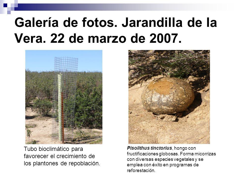 Galería de fotos. Jarandilla de la Vera. 22 de marzo de 2007.