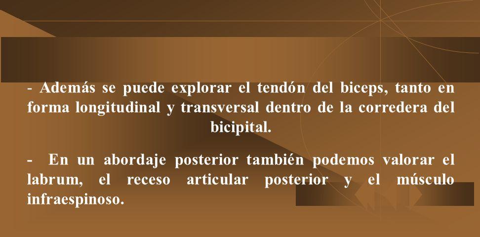 - Además se puede explorar el tendón del biceps, tanto en forma longitudinal y transversal dentro de la corredera del bicipital.