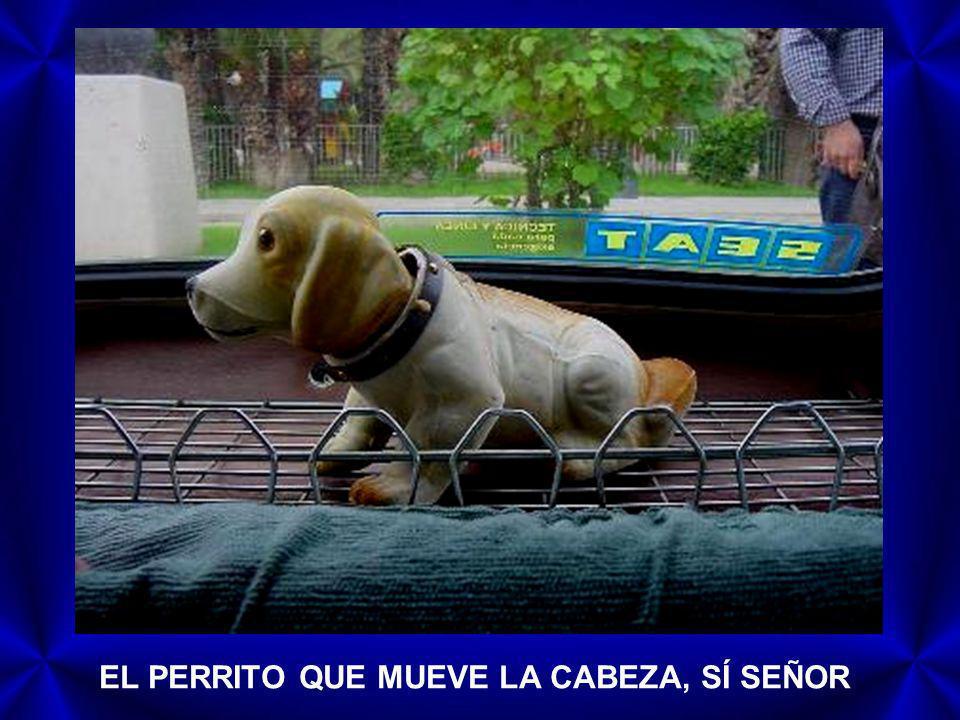 EL PERRITO QUE MUEVE LA CABEZA, SÍ SEÑOR