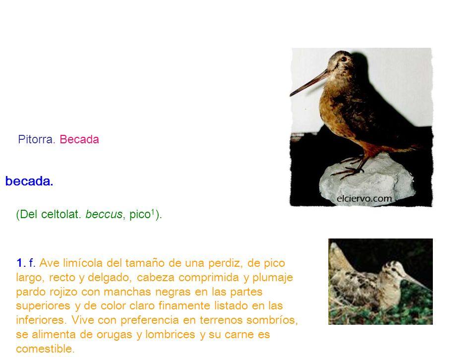 becada. (Del celtolat. beccus, pico1).