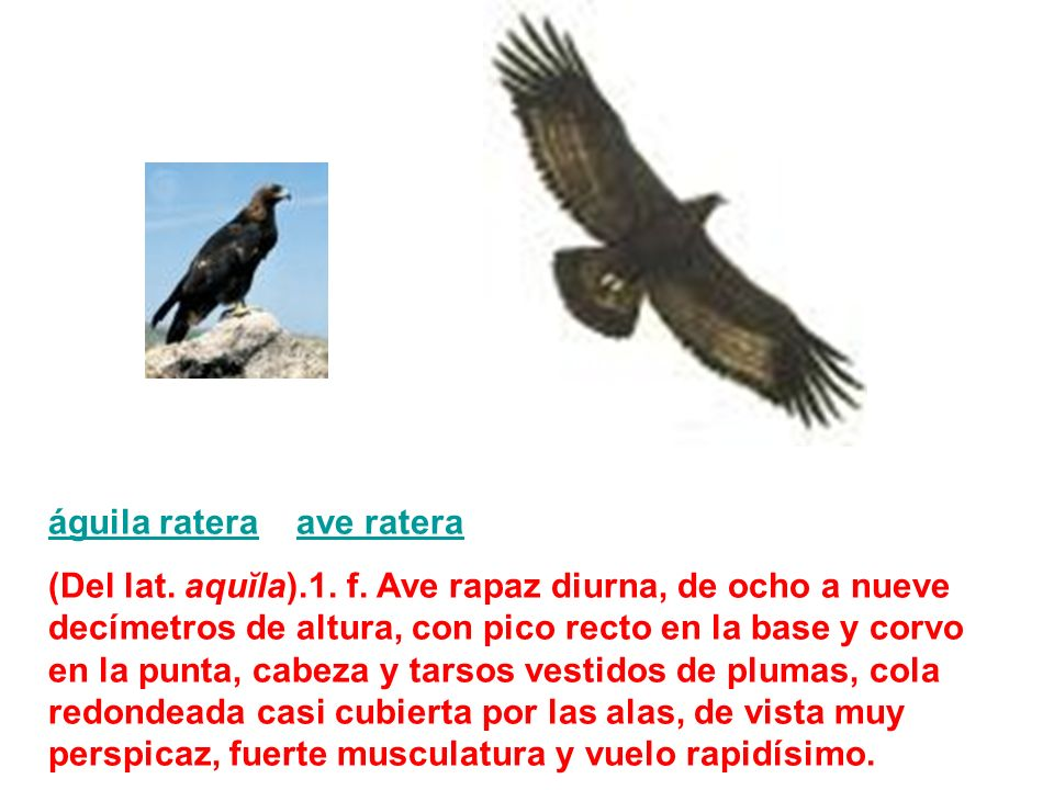 águila ratera ave ratera